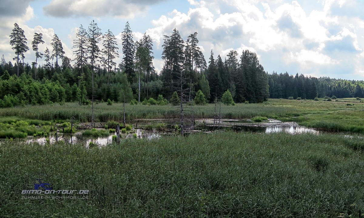 Litauen-Moor
