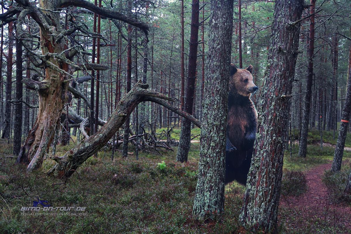 Perakuela-Bär