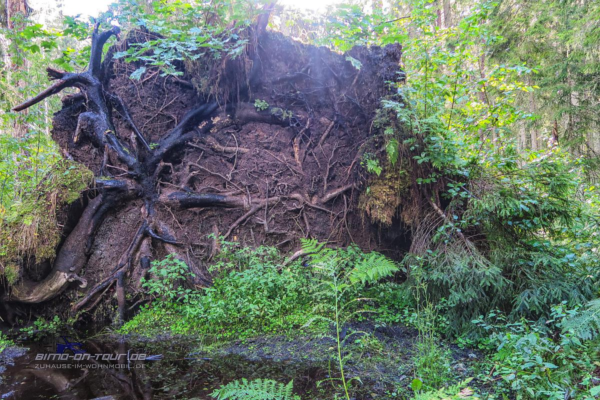 Feuchtwald Wanderung-Oandu
